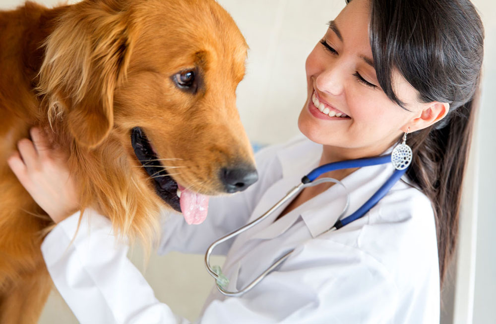 Hartland Veterinarian with Dog